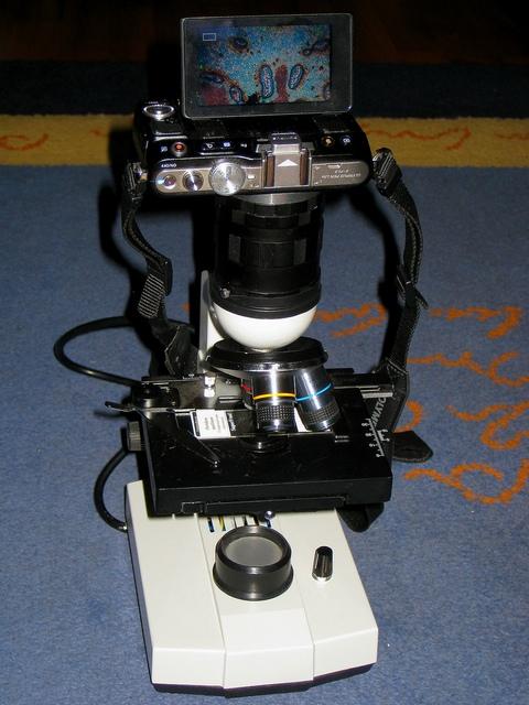фото с микроскопа