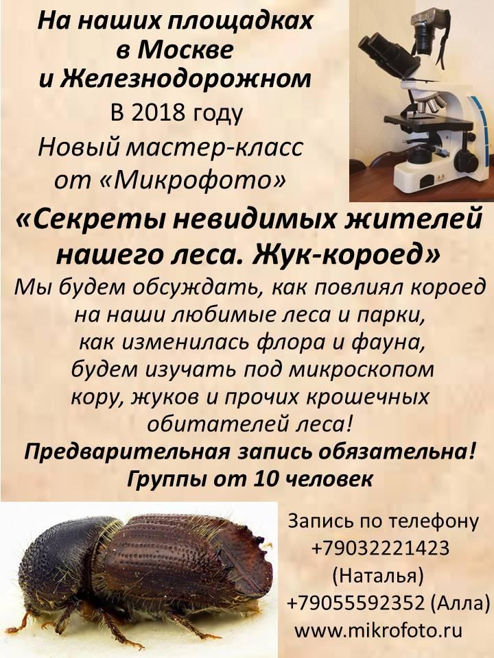 для сайта жук